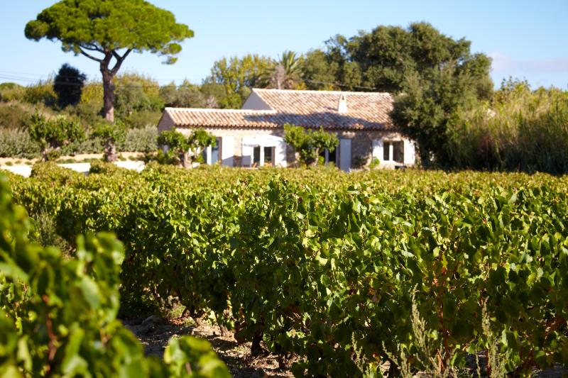 La Ferme des Lices, un vignoble secret situé sur le grand terroir de Saint Tropez